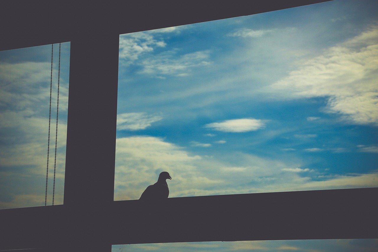 ptaki do odstraszania gołębi